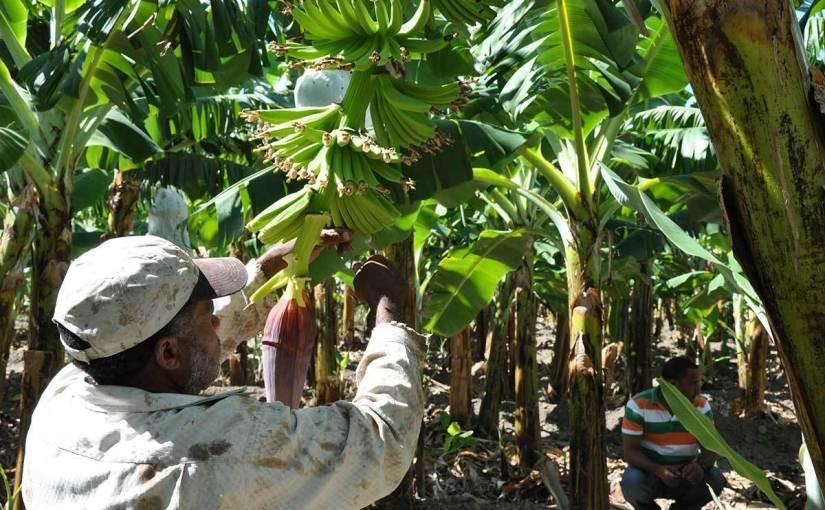 Unión Europea y República Dominicana: aportes en desarrollo, comercio ymigración